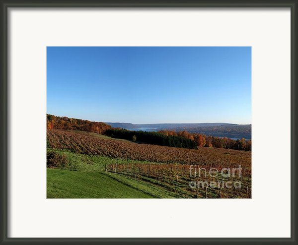 Fall In The Vineyards Framed Print By Joshua House
