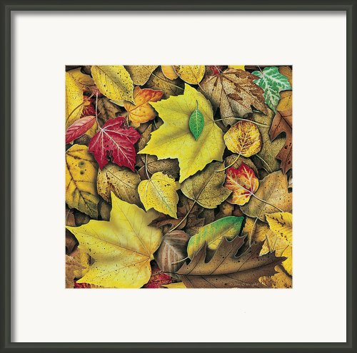 Fall Leaf Study Framed Print By Jq Licensing