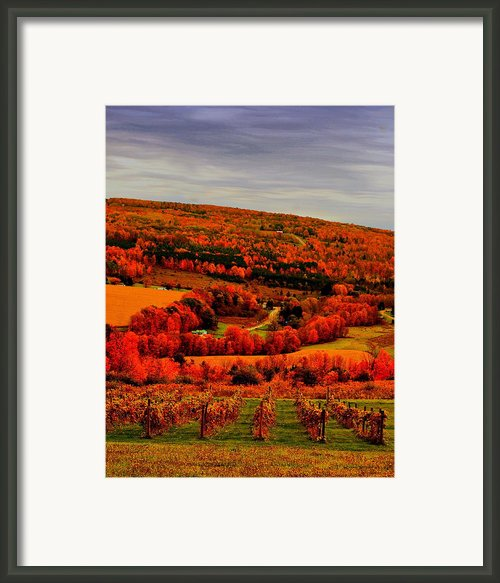 Fall N Wine Framed Print By Emily Stauring
