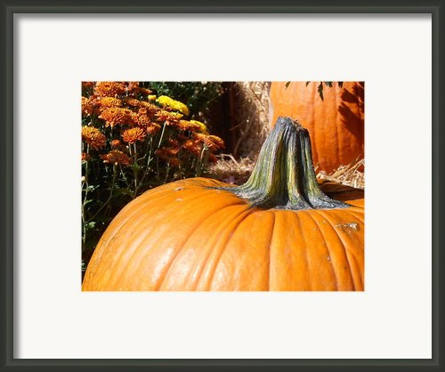 Fall Pumpkin Framed Print By Kimberly Perry