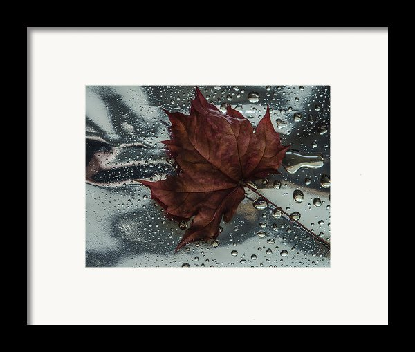 Fallen Leaf Framed Print By Vladimir Kholostykh