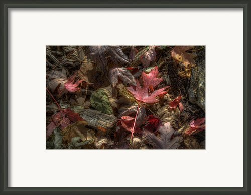 Fallen Framed Print By Scott Norris