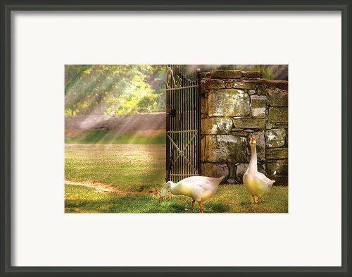 Farm - Geese -  Birds Of A Feather Framed Print By Mike Savad