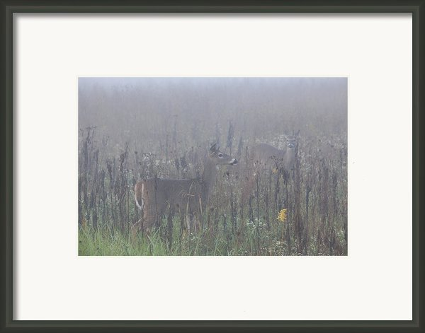 Fawn At Dawn Framed Print By Charles Warren