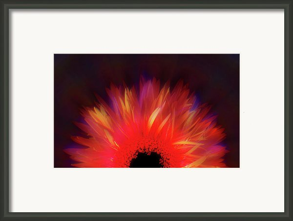 Feathered Floral Framed Print By Li   Van Saathoff