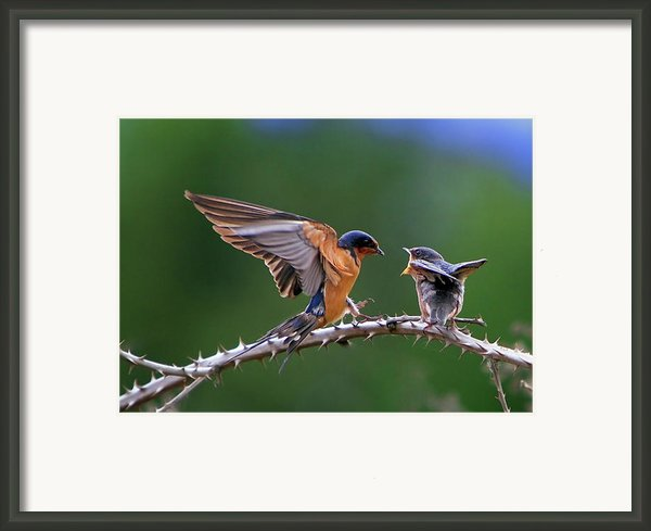 Feed Me Framed Print By William Lee