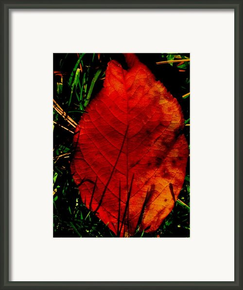 Fell To The Ground Framed Print By Allen N Lehman