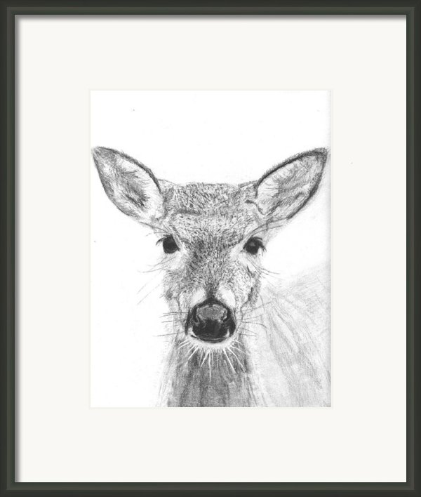 Female White-tailed Deer Framed Print By Marqueta Graham