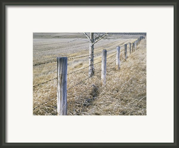 Fenceline And Cropland In Late Fall Framed Print By Darwin Wiggett