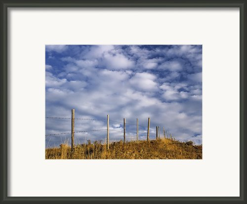 Fenceline In Pasture With Cumulus Framed Print By Darwin Wiggett