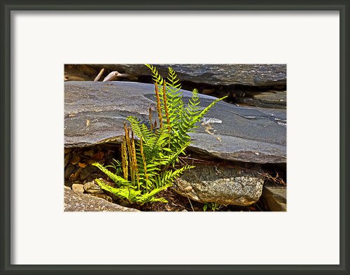 Fern And Rocks Framed Print By Susan Leggett