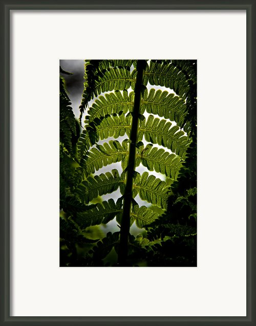 Fern Framed Print By Odd Jeppesen