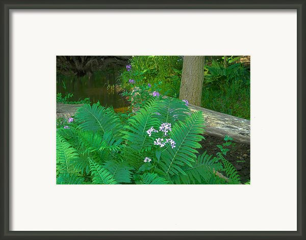 Ferns And Phlox Framed Print By Michael Peychich