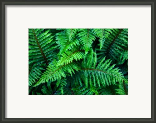 Ferns Framed Print By June Marie Sobrito