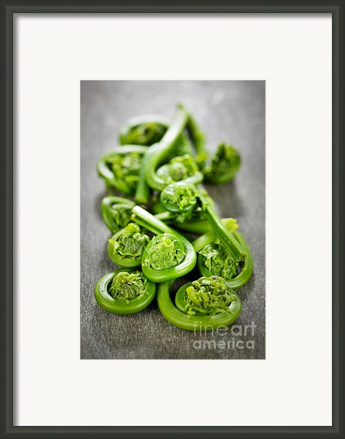 Fiddleheads Framed Print By Elena Elisseeva