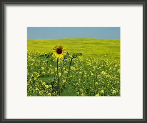 Field Of Yellow Framed Print By Estephy Sabin Figueroa