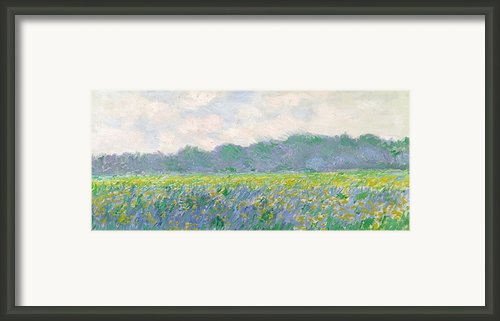 Field Of Yellow Irises At Giverny Framed Print By Claude Monet