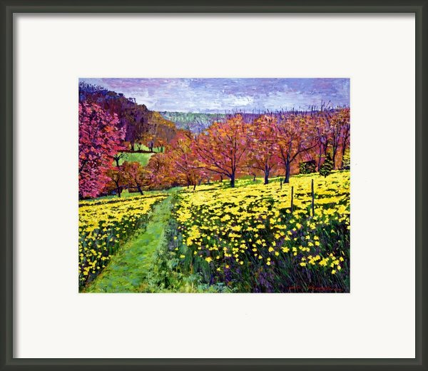 Fields Of Golden Daffodils Framed Print By David Lloyd Glover