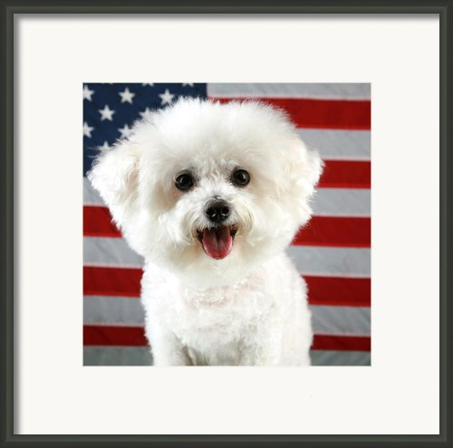 Fifi Loves America Framed Print By Michael Ledray