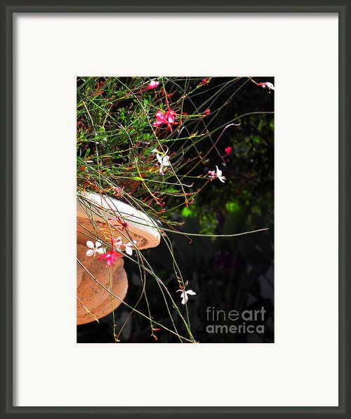 Filigree-iii Framed Print By Susanne Van Hulst