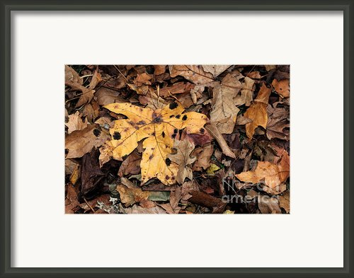 Final Resting Place Framed Print By Terri Thompson