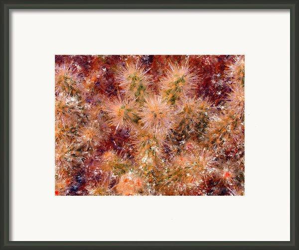Fireworks Explosion Framed Print By Marilyn Sholin
