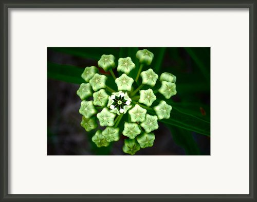 First Bloom Framed Print By Kimberly Gonzales
