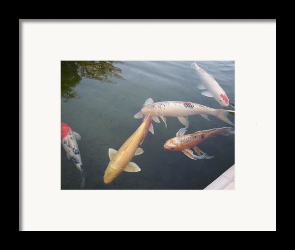 Fish Swimming Framed Print By Val Oconnor