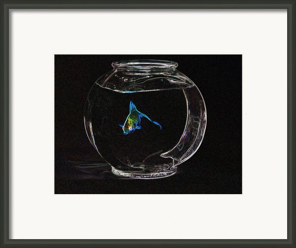 Fishbowl Framed Print By Tim Allen