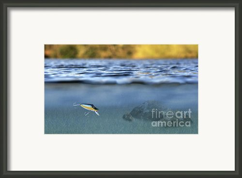 Fishing Lure In Use Framed Print By Meirion Matthias