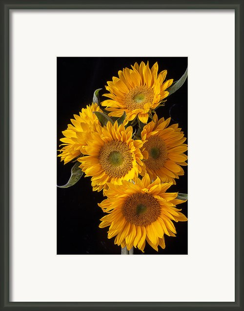 Five Sunflowers Framed Print By Garry Gay