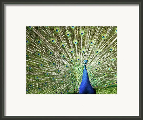Flamboyance Framed Print By Mike Matthews Photography