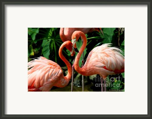 Flamingo Heart Framed Print By Barbara Bowen