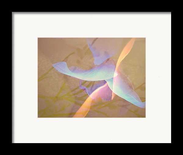 Flight Framed Print By Shirley Sirois