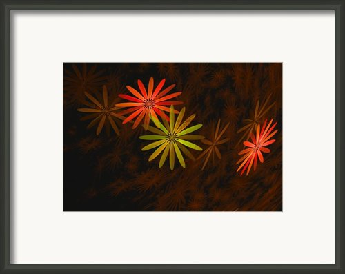 Floating Floral-008 Framed Print By David Lane