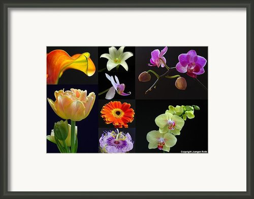 Floral Beauties Over Black Framed Print By Juergen Roth