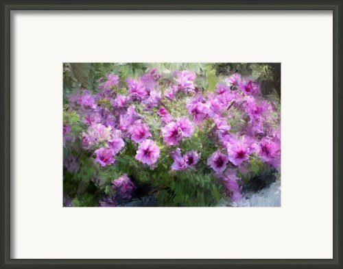Floral Study 053010 Framed Print By David Lane