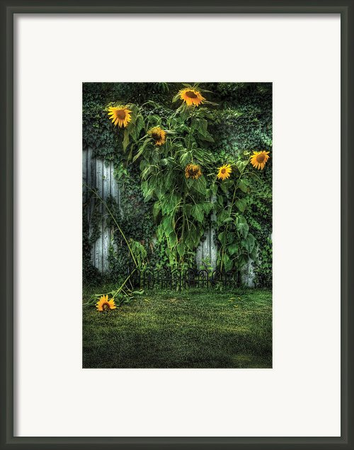 Flower - Sunflowers - Somebody Help Him  Framed Print By Mike Savad