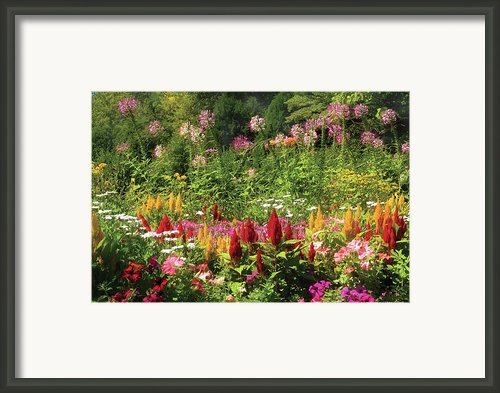 Flower - Wild Flowers  Framed Print By Mike Savad