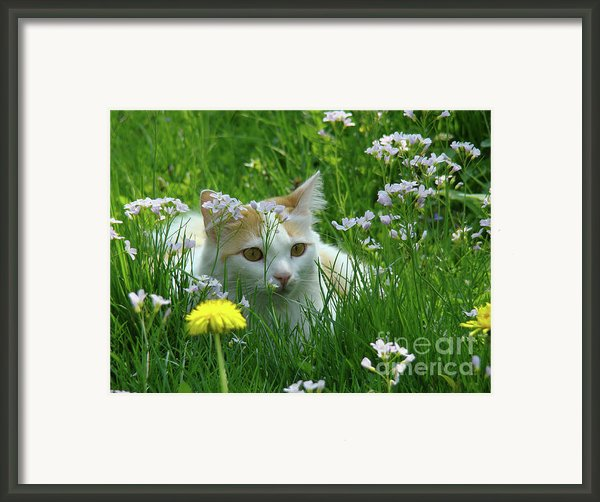 Flower Cat Framed Print By Bruno Santoro