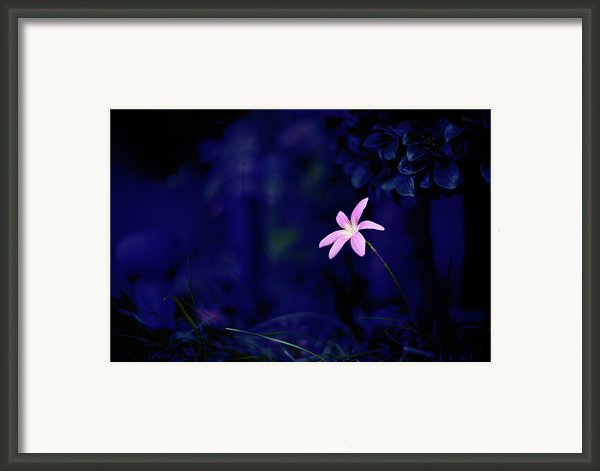 Flower Framed Print By Moaan