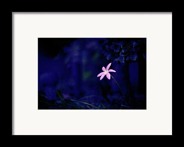 Flower Framed Print By Moaan