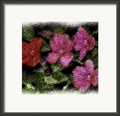 Flower Sketch Framed Print By David Lane