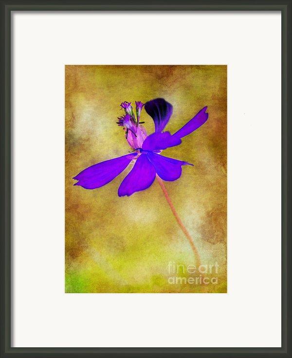 Flower Take Flight Framed Print By Judi Bagwell
