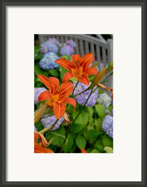 Flowers 263 Framed Print By Joyce Stjames