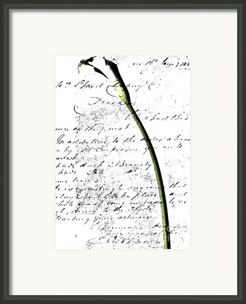 Flowers And Love Letters 2 Framed Print By Anahi Decanio