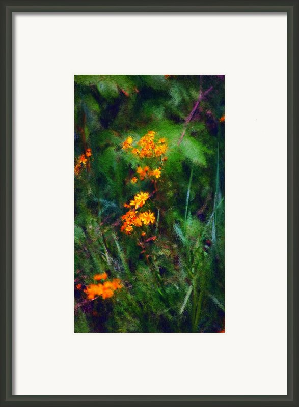 Flowers In The Woods At The Haciendia Framed Print By David Lane