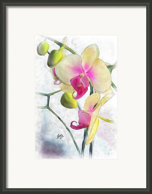 Flowing Orchids Framed Print By Stacy Moore
