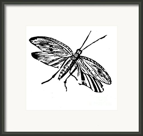 Flying Insect Framed Print By Granger