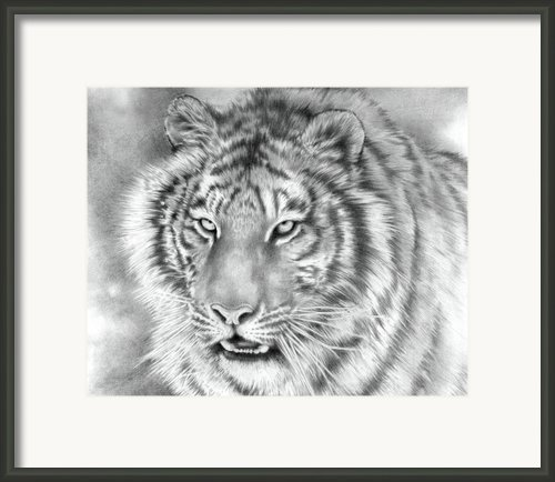 Focus Framed Print By Cliff Lambert